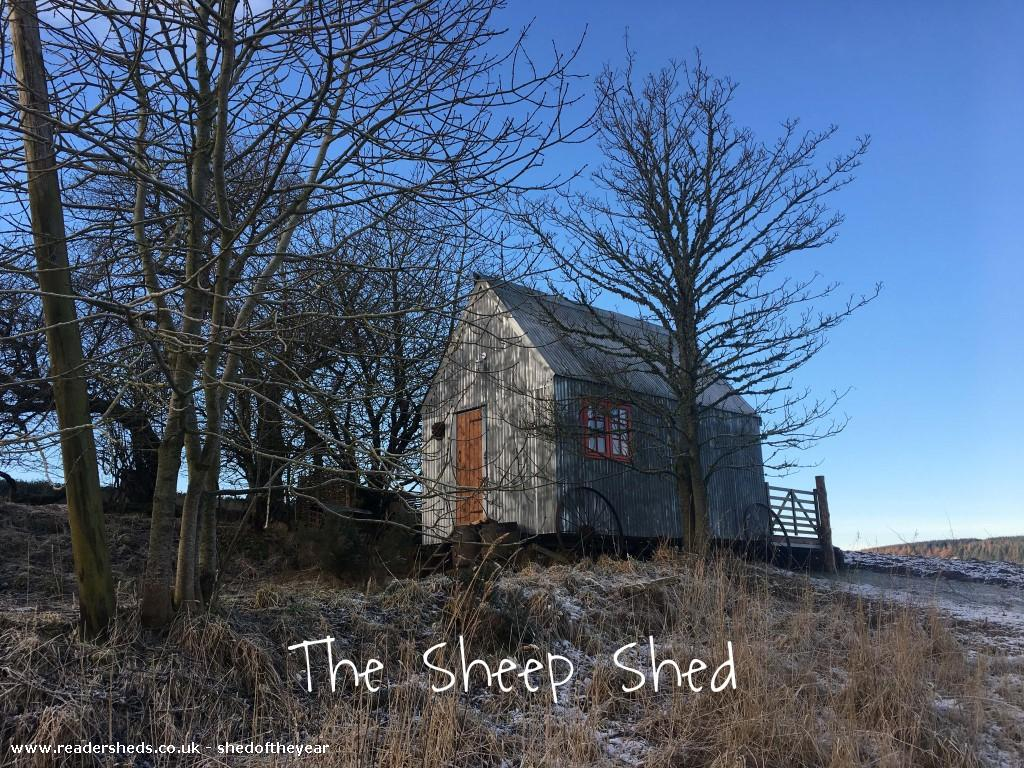 The Sheep Shed